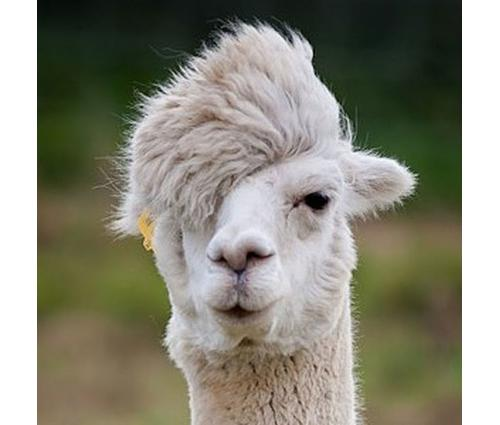 7 Funny Looking Animals And Their Hairstyles