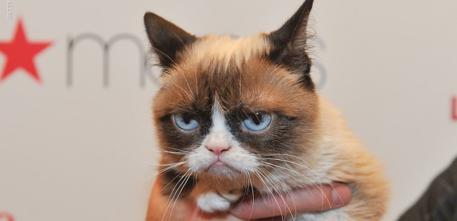 Grumpy Cat - The Cat of A Thousand Memes Just Died